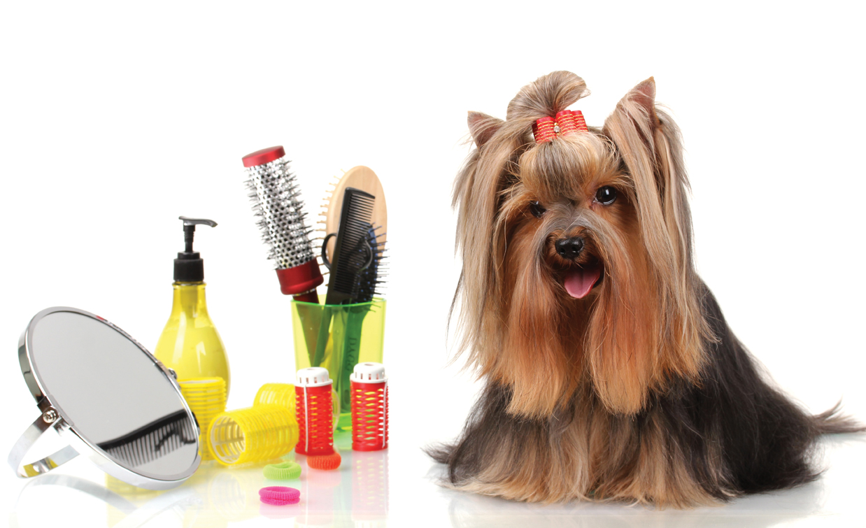 Top tips for dog grooming in akron oh rice 2008 index 2 solutioingenieria Gallery